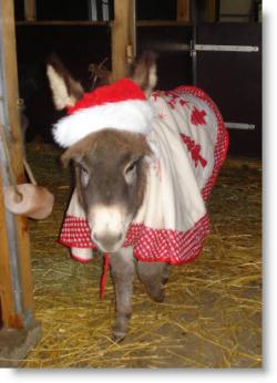 Jan_fellow_kerst_outfit_binnen607